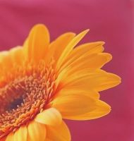 Yellow and pink by Dipliner