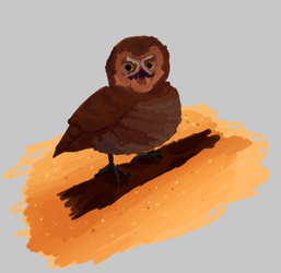 lil owl by Cheezitss