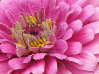 Pink flower by craftywench-nh