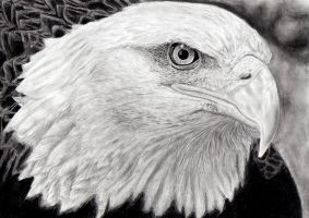 eagle by muse0107