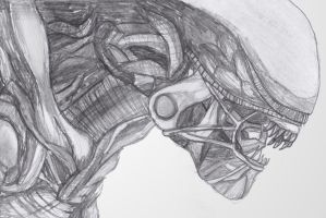 Alien from the film Alien Drawing by addajocl15