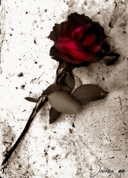 A rose for the dead. by Saturns-Child