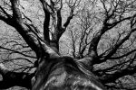 Root Up by Destroth