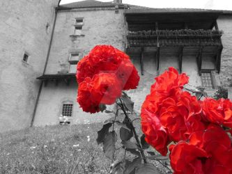 Red flowers by Ainnita