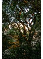 Dusk Through Tryon Trees by steeber
