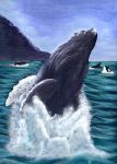 Whale by DarciGibson