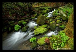 Smoky Mountain Greens by TRBPhotographyLLC