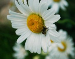 insect. by NurNurIch