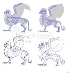Griffon anatomy - 'realistic' vs MLP by Chickenwhite