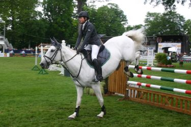 Show Jumping Stock 041 by LuDa-Stock