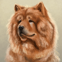chow-chow by minffee