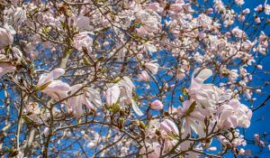 Spring Bloom by jjcpix
