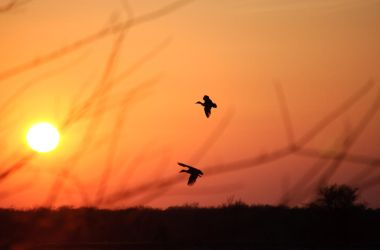 Waterfowl Silhouette by Cojaro