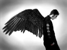wings series cont. again by DarkerThanBlack