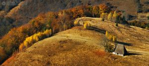 Autumn colors in Apuseni Mountains 19 by adypetrisor
