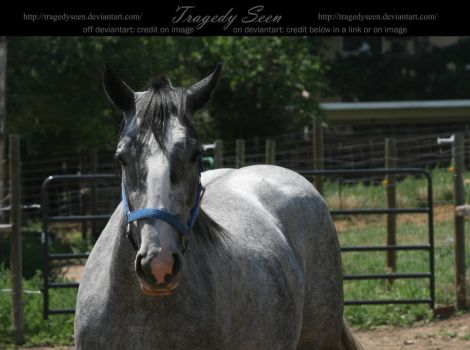 blue roan stock 99 by tragedyseen