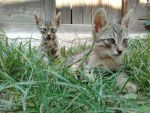 Cute kittens by silviubacky