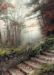 Forest stairs - premium stock by Aeternum-designs