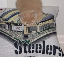 Steelers Fan by Buhla