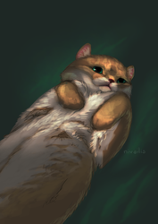 HOSiCO by Lutri
