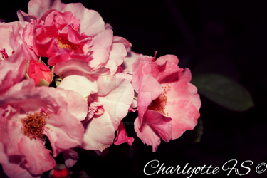 Flowers, by CharlyotteFS