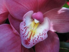 Orchid Close-Up by Verdaera