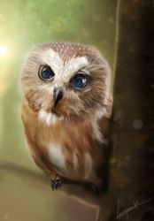 Owl-right by missimoinsane