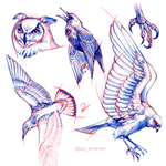Bird anatomy studies by oxpecker