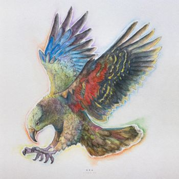 Kea by geckokid