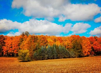 Colors of Autumn by CRG-Free