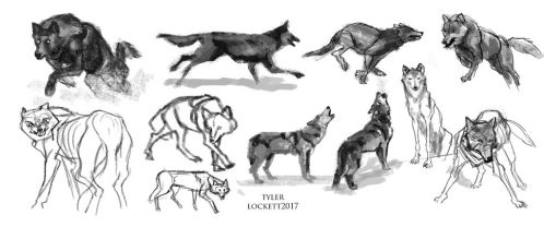 Wolf Sketches2 by tylerlockett
