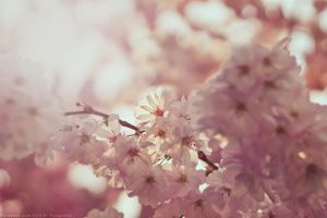 blossom tree by CliffWFotografie