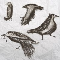 Ink Crows by Soulkreig