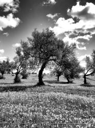 The Dreaming Tree BW by NunoPires