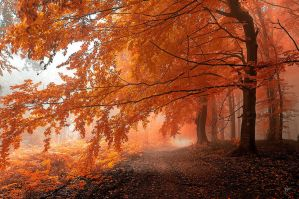 -Autumnal path- by Janek-Sedlar