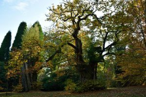 DSC 0069 Sheffield Park Autumn by wintersmagicstock