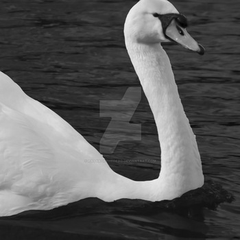 Swan #1 by RaynaOfTheDead