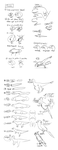 Fish to Dino model sheets by alamedyang