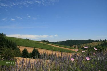 20080725 Oregon Wine Country 1 by manzo