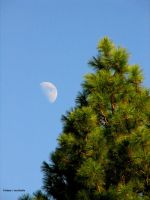 Pine and moon by Albertomono