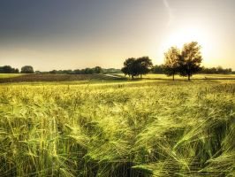 Summer wheatlands pt.I. by realityDream