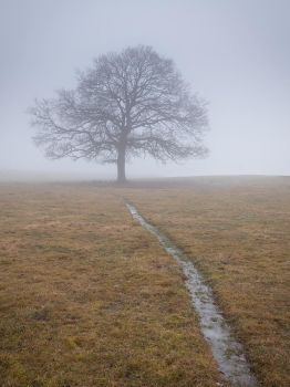 Lonely tree by Wodger