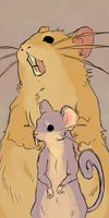 rattata and raticate