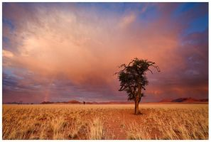 Autumn in the Desert by hougaard