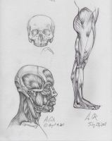 Anatomy-Head Lateral View by andrewcox