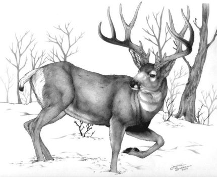 Winter Stag by Emryswolf