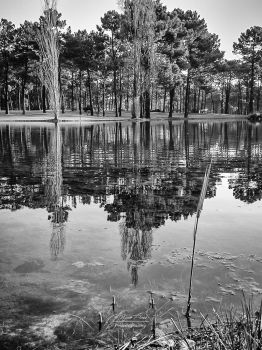 Lake Reflections by NunoPires