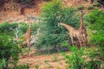 Giraffes of South Africa by Bambr