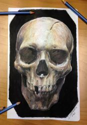 Skull color pencil drawing by AtomiccircuS