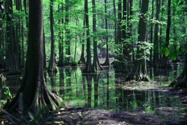 Dreaded Gaia(Hunt)-Short story prelude chapter (3 by ProphetCovenant